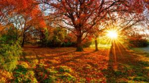 Create a Warm Glow with Autumn Hues