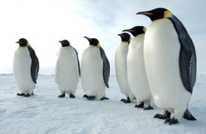 Post Penguin 3.0 Algorithm Strategy