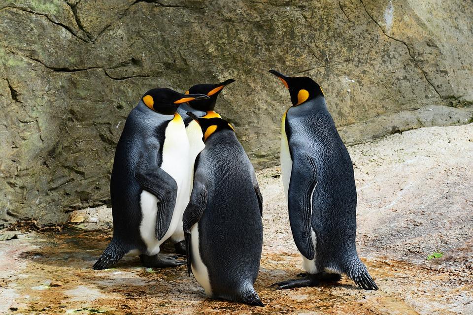 penguin-4-0-update