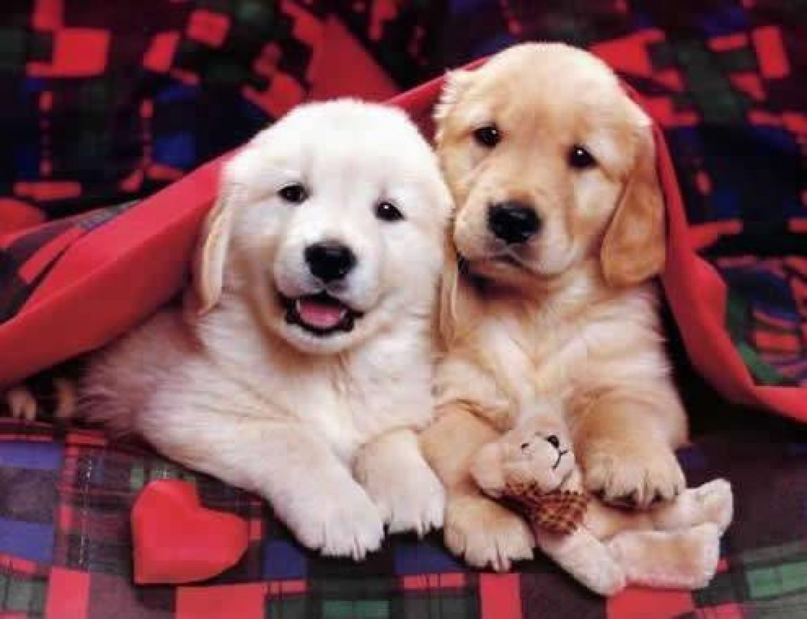 Why do pet shops in the UK need online marketing to become a thriving business?