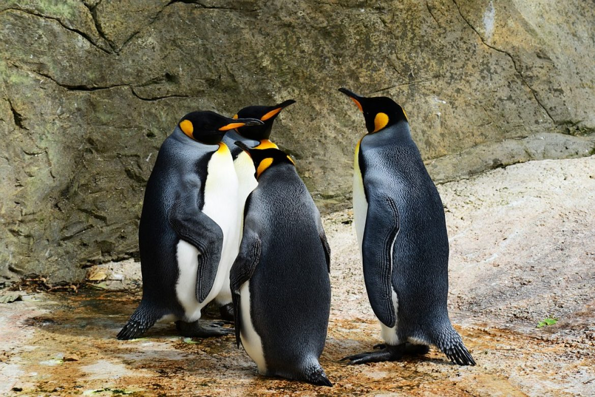 Penguin 4.0 is now running – Real time so all good and bad